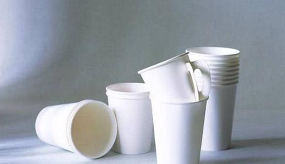 桉树制生物塑料杯或将取代传统一次性纸杯