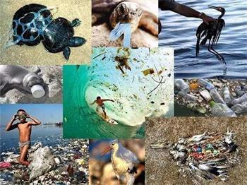 快递制造的各种塑料包装垃圾流向何方?
