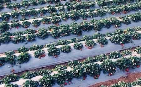 农用塑料制品是现代农业发展不可缺少材料