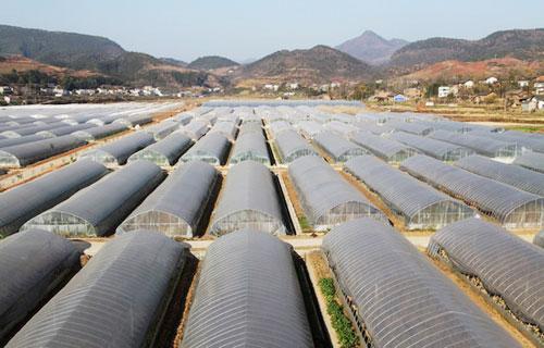 2020年我国农膜回收和综合利用率达80%