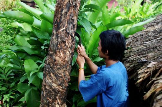 橡胶稳定基金发挥作用 泰国橡胶价格将日趋稳定