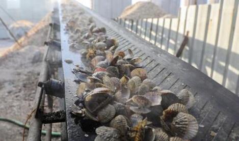 """日本东京湾及冲绳海岸贝类体内发现大量""""微塑料"""""""