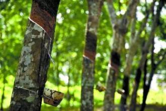 海南橡胶壮大海外天然橡胶产业